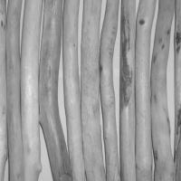 driftwood © p ward 2010