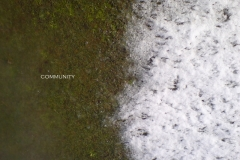 community-2-digital-photo2009.jpg